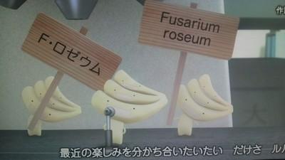 アニメ2ED_F.ロゼウム.JPG